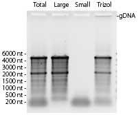 RNA_Analysis_SPLIT_mRNA_Extraction_Kit