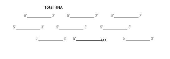 sensemRNA_workflow01