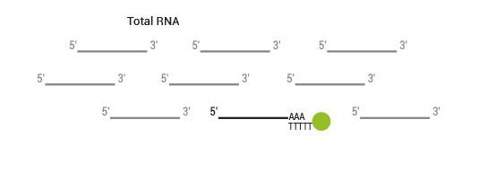 sensemRNA_workflow02
