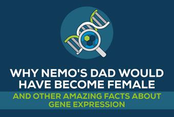 Gene-expression-lexogen