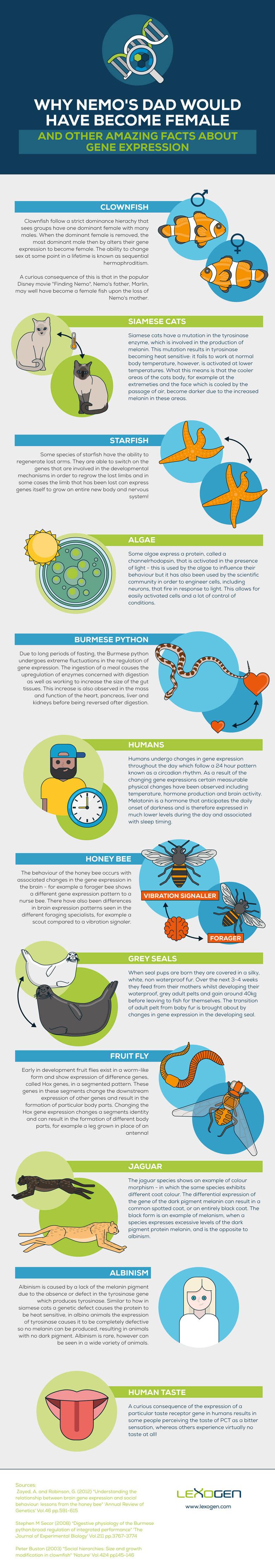 Gene-infographic-lexogen