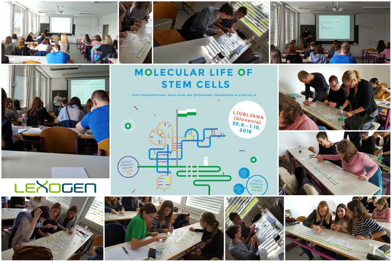 molecularlifeofstemcells_workshop-collage