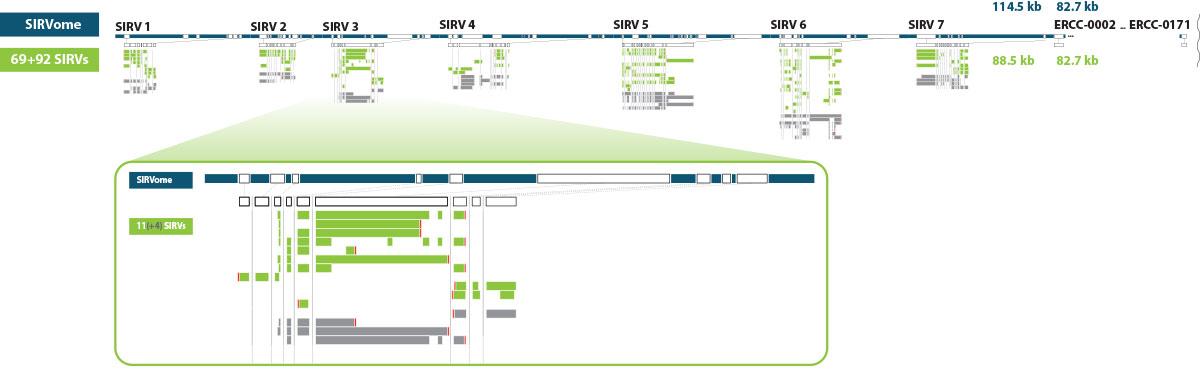 SIRVs_Figure2
