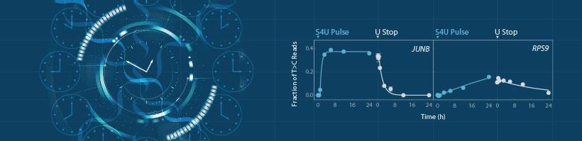 SLAMseq-Time-Resolved_Image_Blog