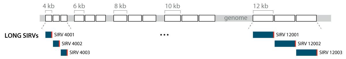 Long-SIRVs-SIRV4001-SIRV12003