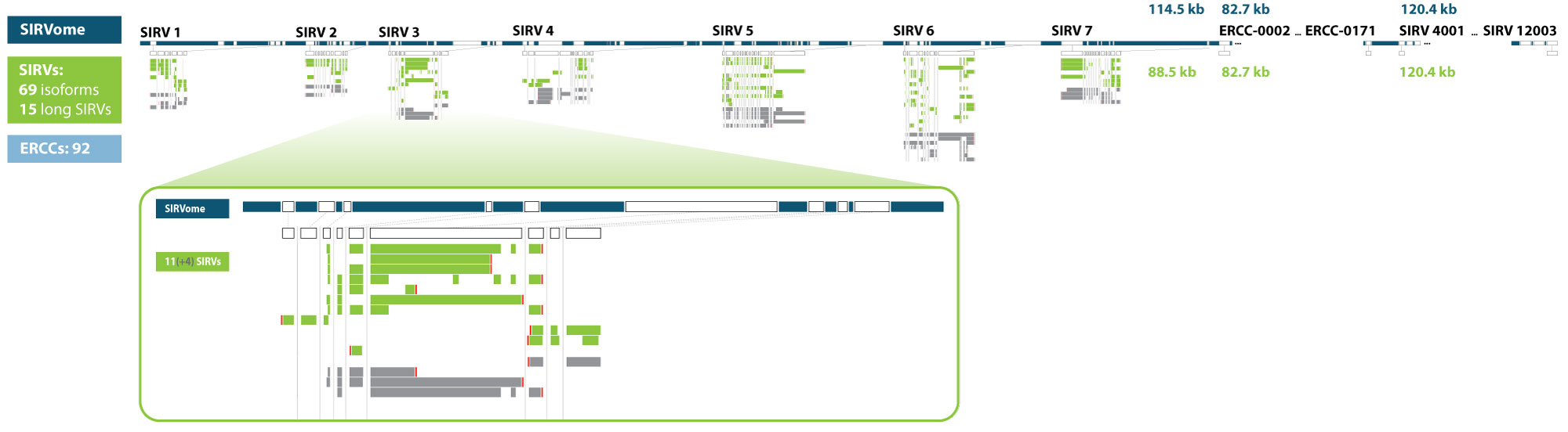 SIRVome-and-SIRV-transcripts