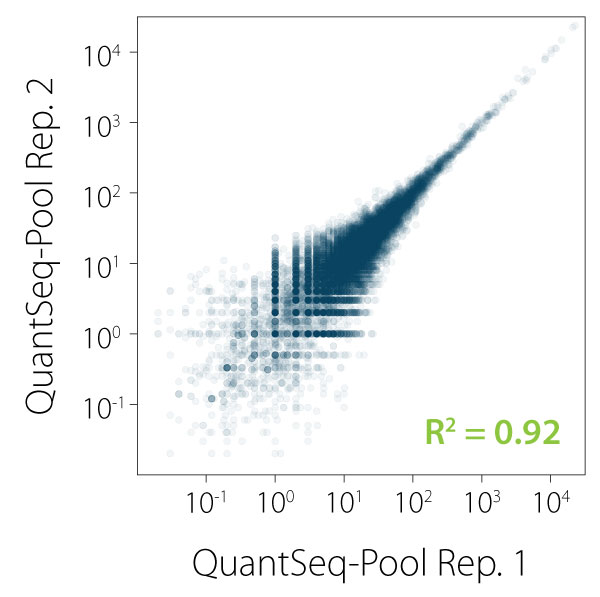 080_Correlation between replicates for individual samples in QuantSeq-Pool