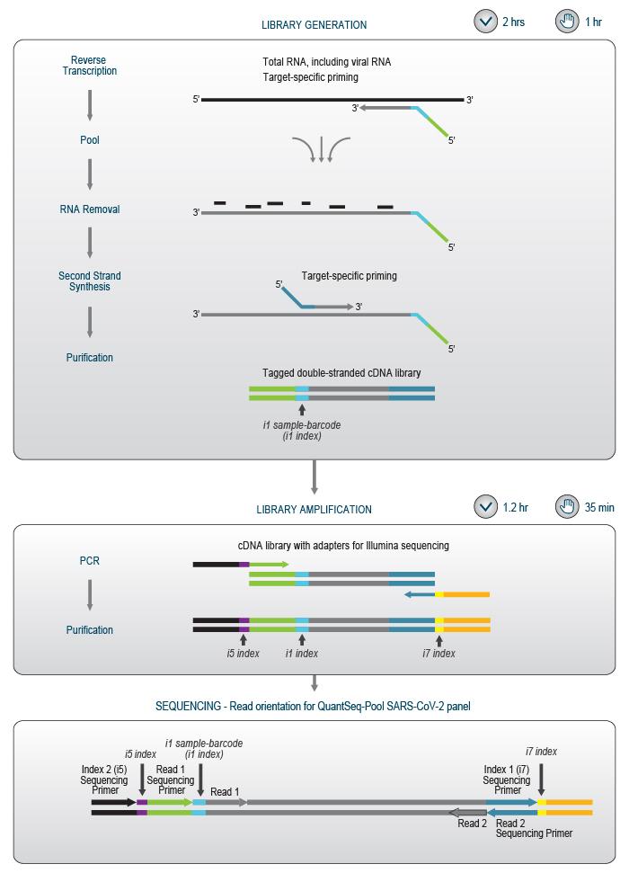 160_SARS-CoV-2 panel_scheme-Workflow_V0100