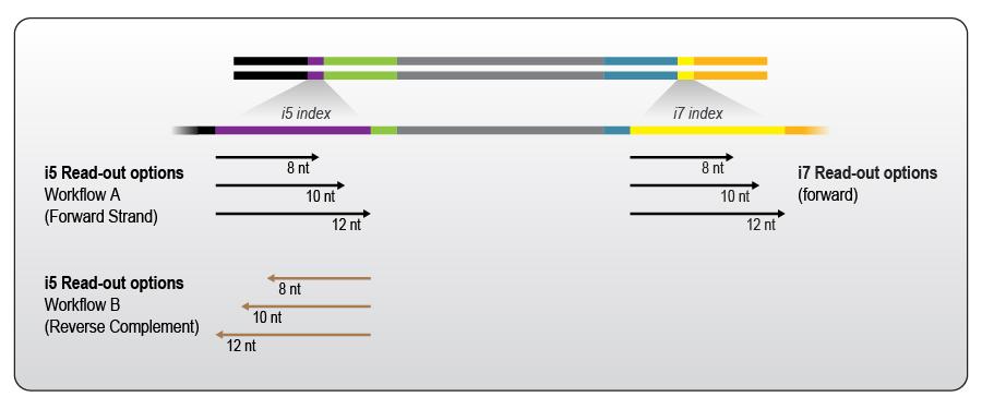 https://www.lexogen.com/wp-content/uploads/2020/11/Lexogen-12-nt-UDI-Sets_Optional-read-out-lengths.jpg