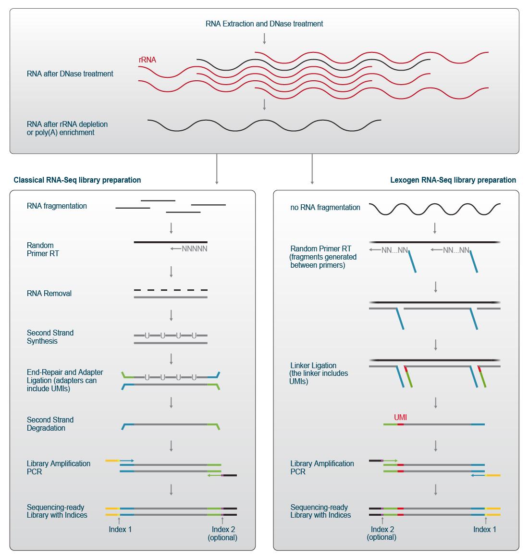 Lexogen_RNA-LEXICON_Chapter1_Graph-01