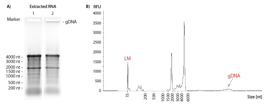 Lexogen_RNA-LEXICON_Chapter5_Graph-01